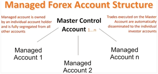 managed forex account structure