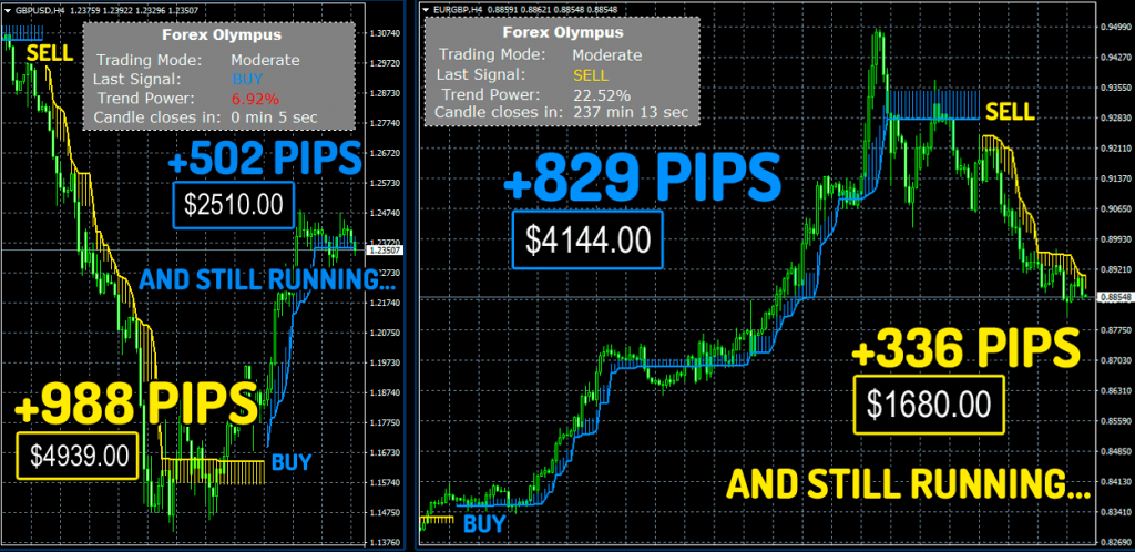 Forex Olympus Robot Trading results